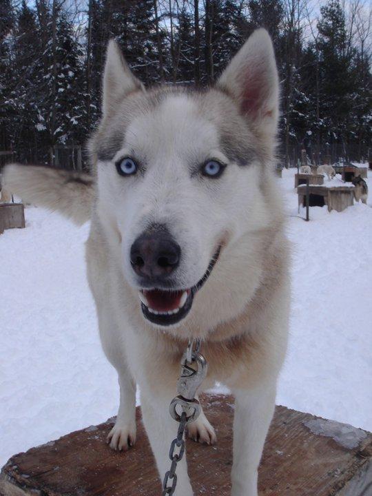 Dog Sledding di QuebecCity