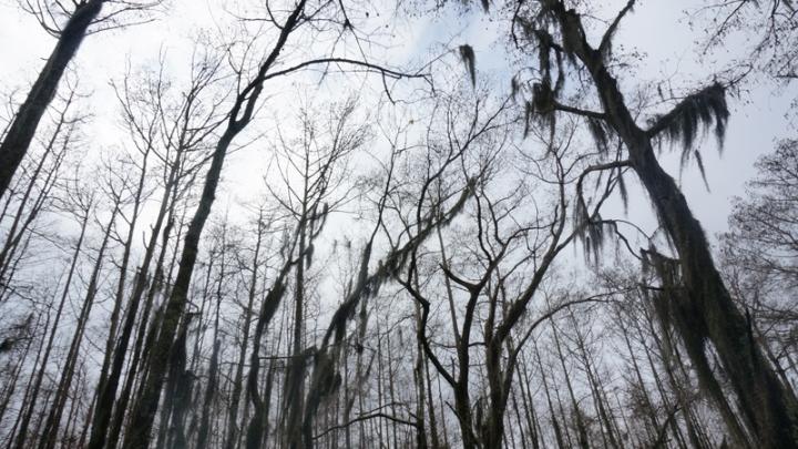 swamp11