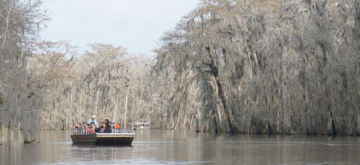 swamp5